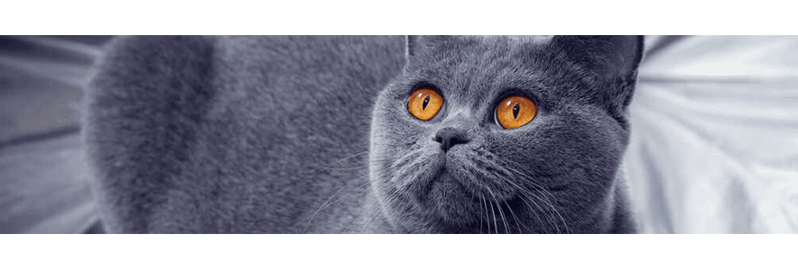 Karma mokra dla kota – wykwintny element kociego menu