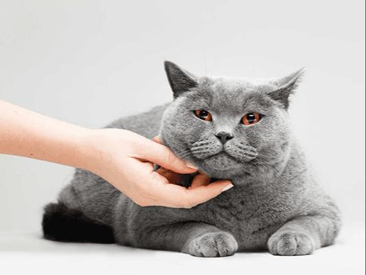 Kot nie chce jeść mokrej karmy — sprawdź, jakie mogą być powody!