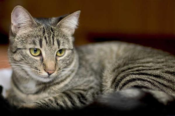 Kot wymiotuje po jedzeniu - sprawdź, jak radzić sobie z problemami trawiennymi swojego podopiecznego