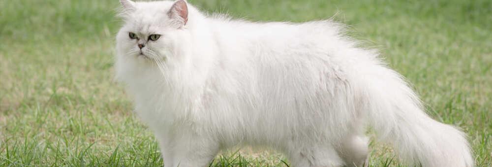 Kot zakopuje jedzenie? Sprawdź, co to może oznaczać?