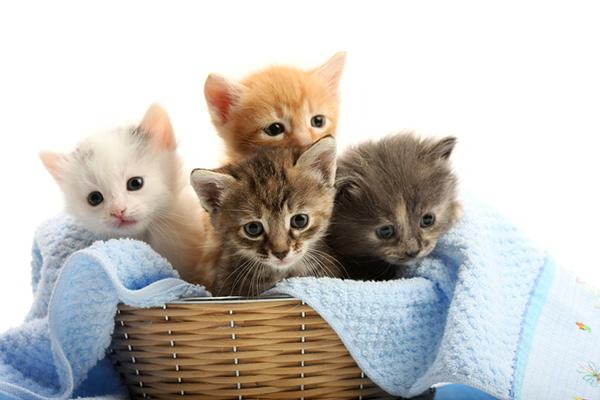 Małe kotki – rozwój kota od małego, jak zadbać o kocięta?