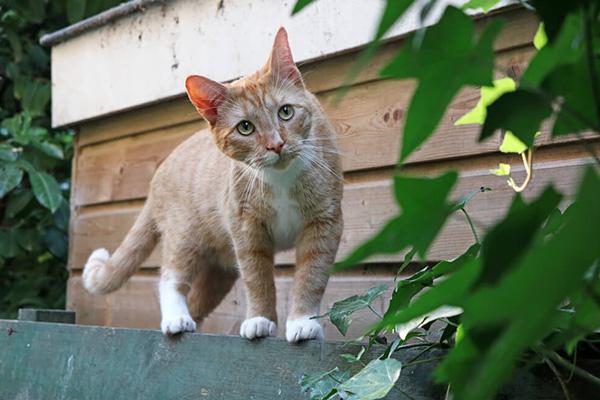 Miauczenie kota – co chce Ci powiedzieć Twój kot?