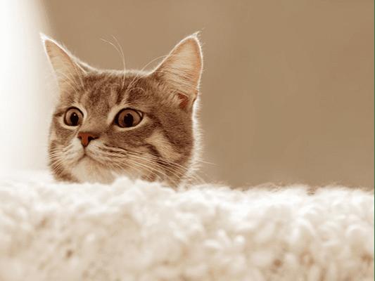 Najlepsza karma dla kota - jak spełnić pragnienia kocich podopiecznych?