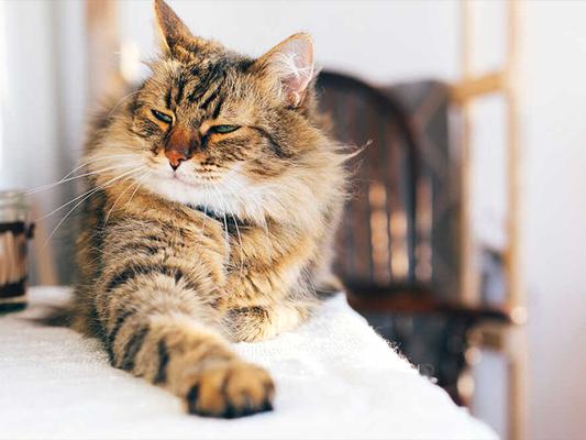 Otyły kot - oznaka miłości opiekuna czy błędy popełniane w żywieniu?