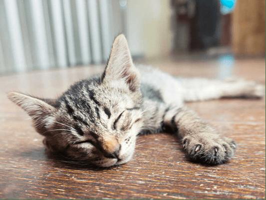 Pokarm dla kota, któremu nie oprze się żaden smakosz - sprawdzone pomysły