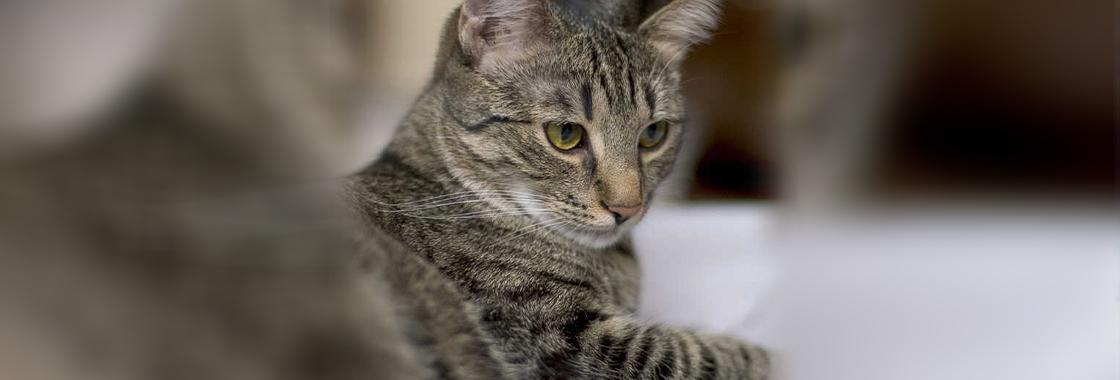 Przekąski dla kota, które skradną serce Twojego mruczka