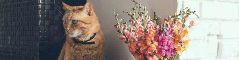 Rośliny bezpieczne dla kota – te gatunki nie zrobią krzywdy Waszemu pupilowi!