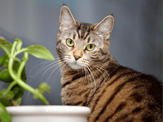 Rośliny trujące dla kota - przed czym chronić naszego pupila?