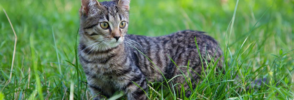 Suchy nos u kota – czy zawsze świadczy o chorobie?