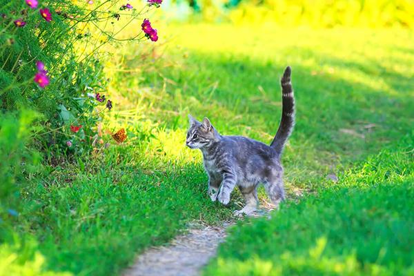 Obcinanie pazurów u kota – kiedy, jak i czy w ogóle to robić?