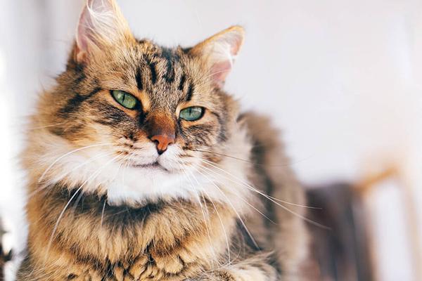 Adopcja kota – wszystko, co powinieneś wiedzieć, zanim zdecydujesz się na adopcję kota