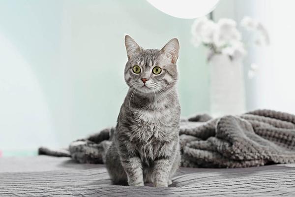 Agresywny kot – jak poskromić jego instynkt łowiecki?