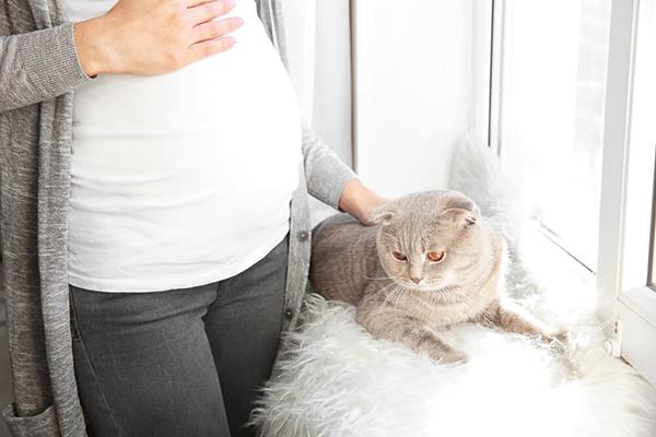 Ciąża a kot – czy kot w domu stanowi zagrożenie dla ciężarnej?