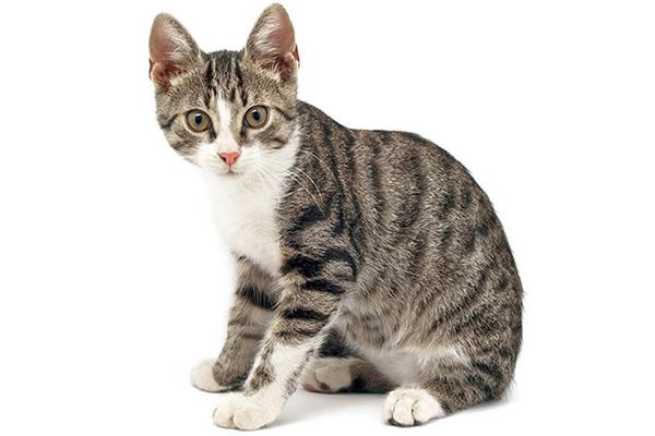 Wystraszony kot – jak mu pomóc?