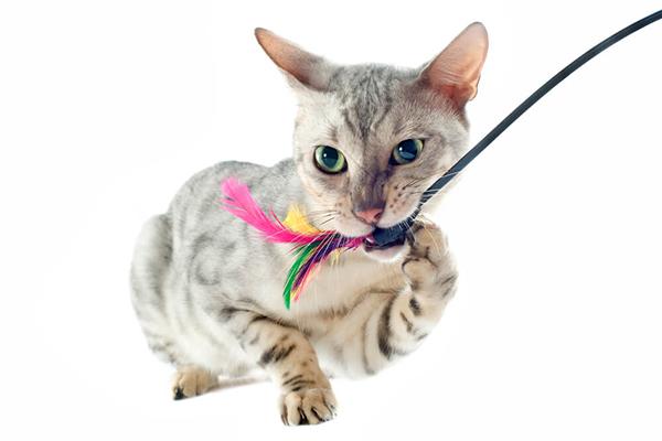 Dlaczego kot gryzie – forma zabawy czy mechanizm obronny?
