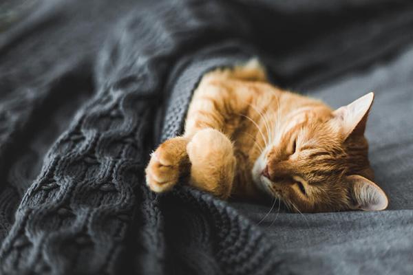 Dlaczego kot miauczy w nocy?