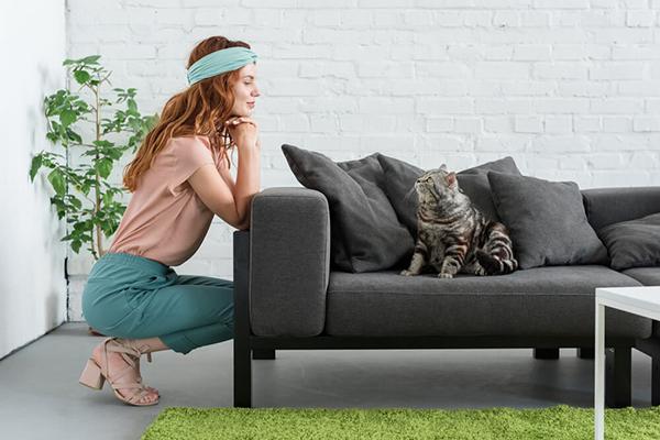 Ile kosztuje utrzymanie kota? Sprawdź, z jakimi wydatkami wiąże się opieka nad zwierzęciem