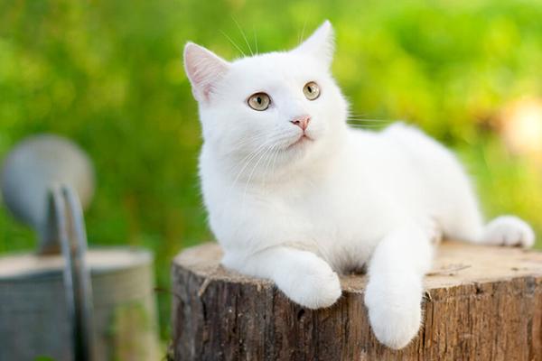 Jak pozbyć się zapachu kociego moczu?