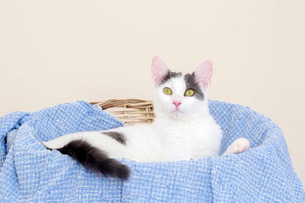 Kąpanie kota – czy koty powinno się kąpać?