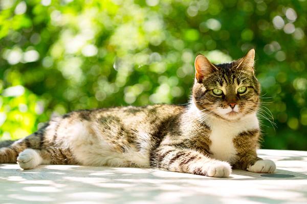 Kot kicha – czy to powód do zmartwień?