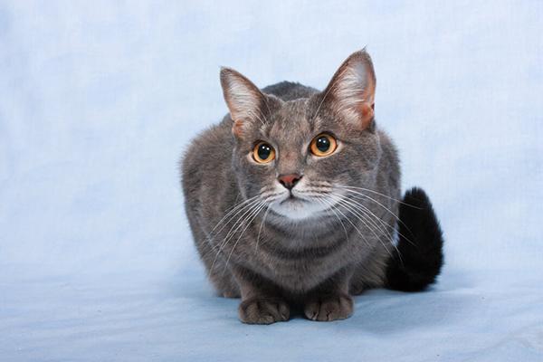 Kot nie miauczy? Co to może oznaczać?