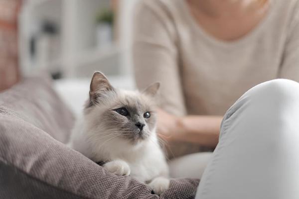 Kot w domu – jak stworzyć kotu najlepsze warunki?