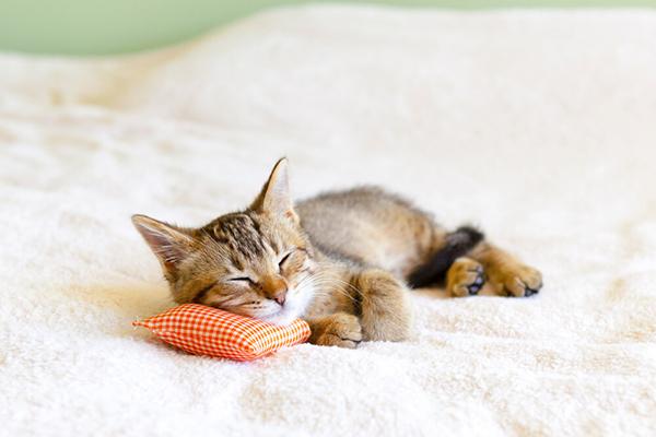 Mały kot w domu – jak pomóc kocięciu w aklimatyzacji?