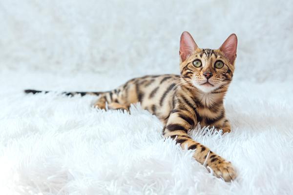 Opieka nad kotem – sprawdź, jak pielęgnować kota