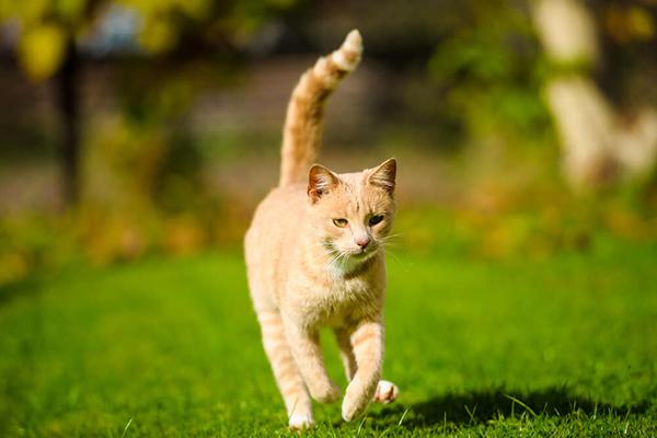 Tauryna dla kota – jakie ma znaczenie?