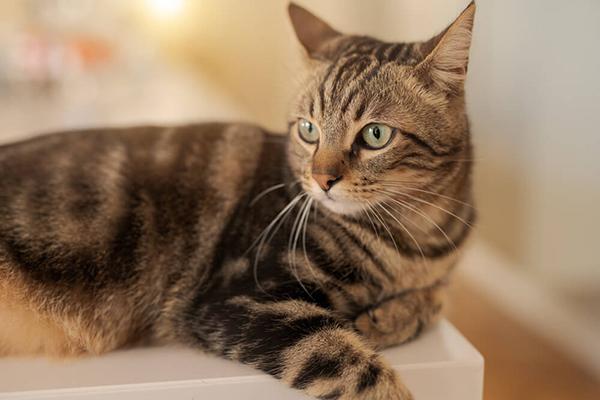 Wyprawka dla kota – w co się wyposażyć przed przybyciem mruczka?