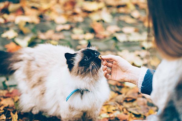 Trafił Ci się kot niejadek? Zobacz, jak zadbać o jego prawidłowe odżywianie