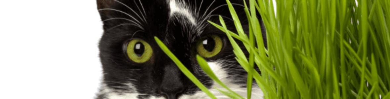 Trawa dla kota - po co podawać ją naszym podopiecznym?