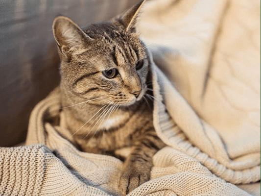 Wątróbka dla kota - rarytas czy podstawowy składnik diety?