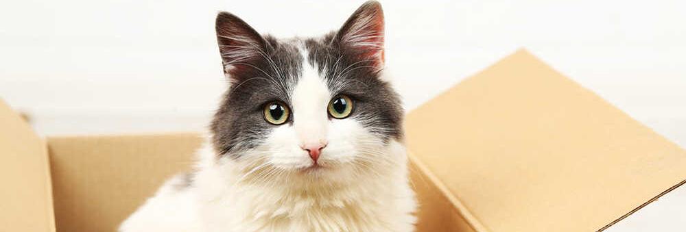 Wołowina dla kota - czy powinna znaleźć się w jego codziennym jadłospisie?