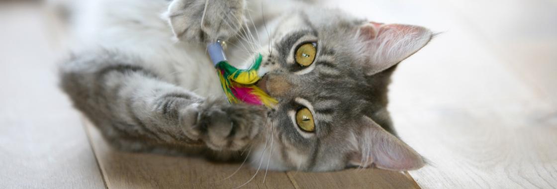 Zabawki dla kota – które z nich są bezpieczne dla Twojego kota?