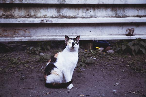 Żywienie kota - jak sprawić, by nasz pupil był szczęśliwy?