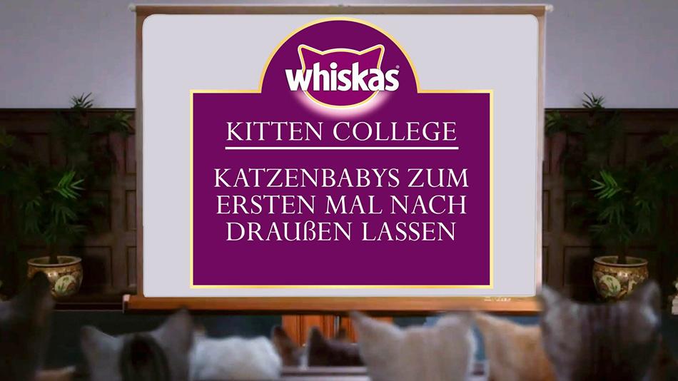 Kitten College