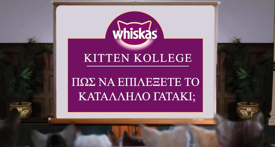 Πώς να επιλέξετε το κατάλληλο γατάκι;