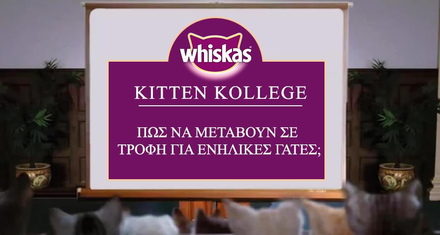 Πώς να μεταβούν σε τροφή για ενήλικές γάτες;