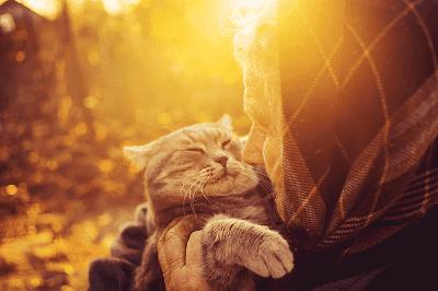 Rutinlah memeriksa kucingmu untuk umur yang lebih panjang