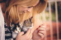 Persiapan untuk kedatangan anak kucingmu