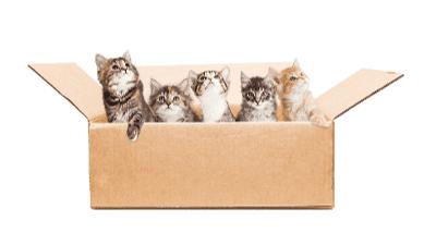 Apakah Anda Berpikir untuk Adopsi Anak Kucing?