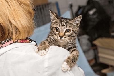 Bagaimana cara memeriksakan kesehatan anak kucingmu