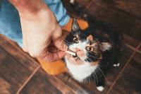 Nutrisi yang dibutuhkan oleh kucing