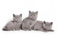 Lebih mengenal anak kucingmu