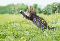 Indera anak kucing