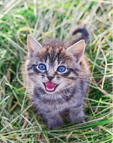 Suara mendengkur dan panggilan anak kucing