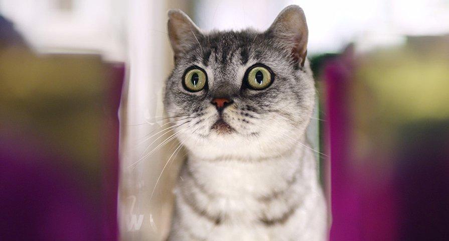 Menua dengan cantik: Bagaimana kucing saya bisa tetap luar biasa sampai usia tua