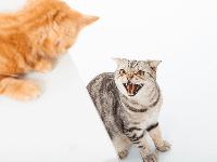 Mengurangi Sifat Agresif