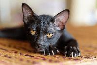 Tips Perawatan Cakar Kucing